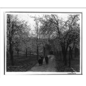 Historic Print (M) [Three small boys standing on a dirt road among